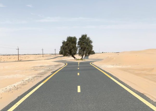 Lara Chandler - Trees in the Dubai desert, photographed by 澳彩网彩票 photography student Lara Chandler